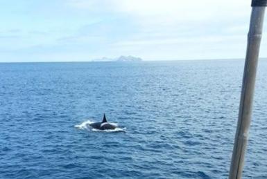 orca san diego