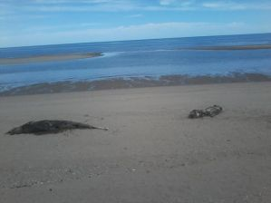 delfines y lobos marinos muertos