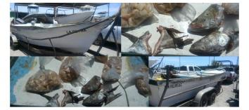 totoaba detneidos pescadores