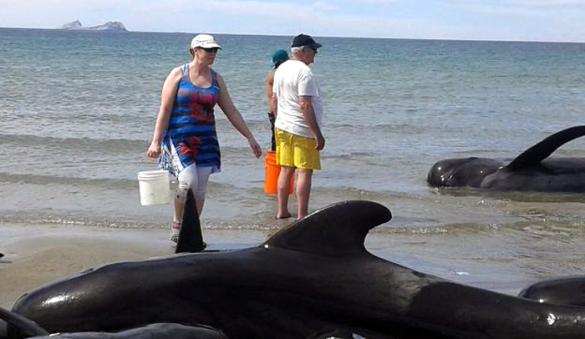 varamiento ballenas ok (1)